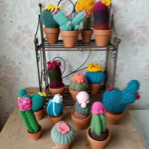 kaktussen